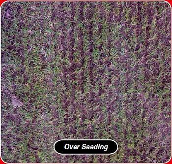 power rake for over seeding